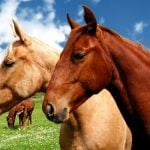 Findus horsemeat spreads to Norway