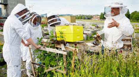 Oslo abuzz with new urban beehives
