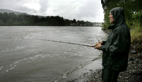 Fish farms blamed for wild salmon decline