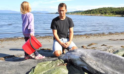 Mystery dolphin deaths hit Norway