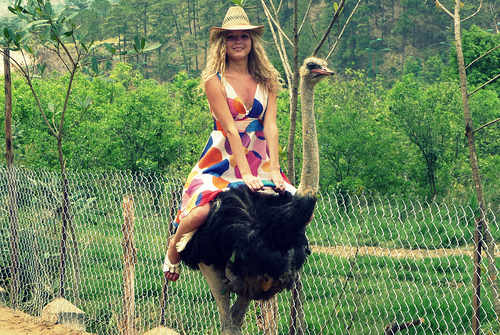 Norway celeb in high speed fall from ostrich