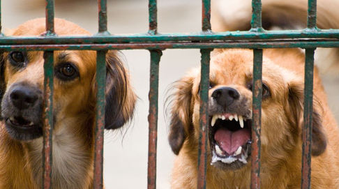 Norway bans puppies from The Netherlands