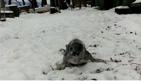Woman rescues baby seal lost in the woods