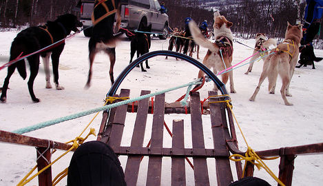 Norway uni to offer dog sled course