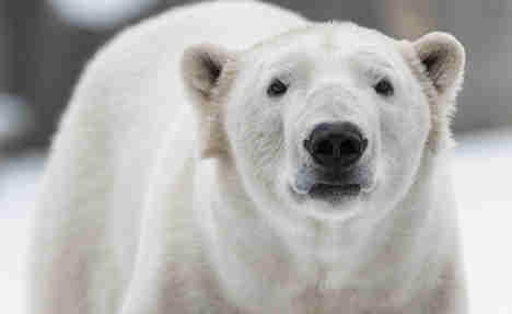 Inquest finds poor safety in boy's polar bear death