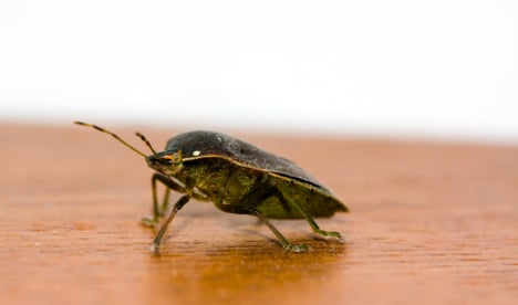 Bed bugs in Norway make comeback