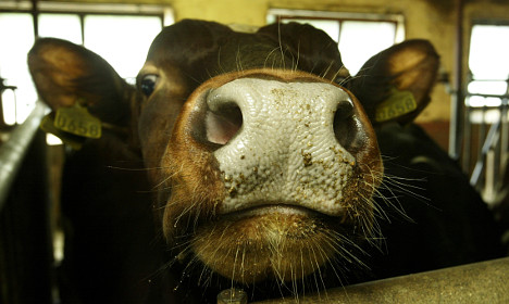 Norway finds 'probable' case of mad cow disease