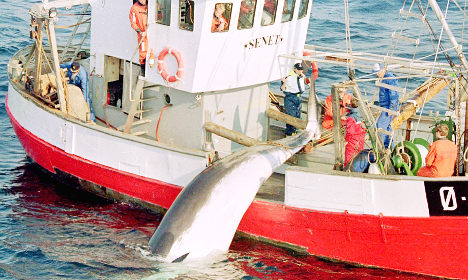 Japan dumps 'unsafe' Norway whale meat