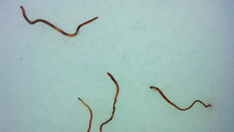 Earthworms rain from sky over Norway