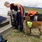 Norway dogs find woman alive in Nepal rubble