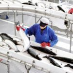 Norway makes EU deal to extend fish exports