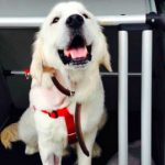 Sick dog driven from Oslo to UK for surgery