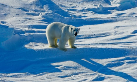 Polar bears 'a nightmare' for Arctic scientists