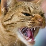 Norway pets at risk of 'Cat Aids': charity