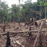 Norway makes major rainforest commitments
