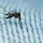 Norway issues new Zika advice for pregnant women