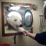 Fake news alert: 17-year-old pic of polar bear visiting Norwegian vessel passed off as new