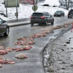 'Offal accident': Animal guts spilt on Norway road