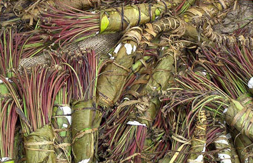 Woman caught smuggling gold, khat and cash on Denmark-Norway ferry