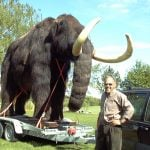 Woolly mammoth spotted in Norwegian traffic