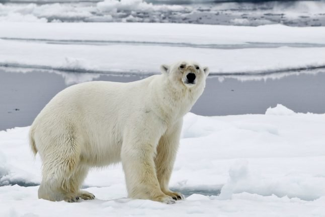 Norway fines tourist guide for scaring polar bear