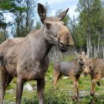 Feeling the call of the wild? Visit Langedrag Nature Park
