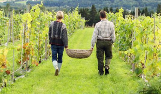 World's most northerly vineyard for sale in Norway