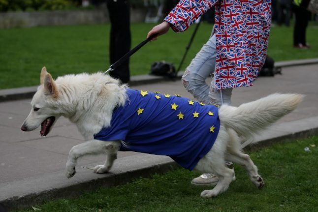 Pet travel after Brexit: Brits living in EU urged to visit vets
