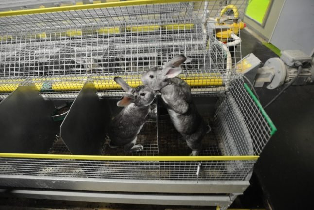 Norway to ban fur farms by 2025