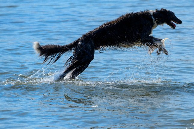 Norway's dogs are being hit by a mystery illness
