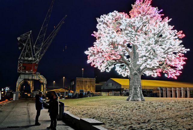 WATCH: The dazzling Oslo tree that became a sleeper Christmas hit