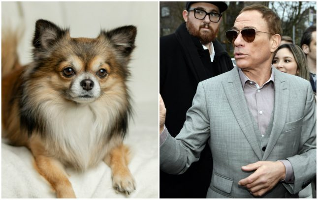 Jean-Claude Van Damme saves puppy from death in Norway